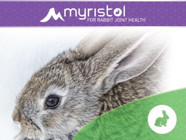 Rabbit Joint Supplements